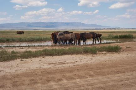 Kazakh grasslands